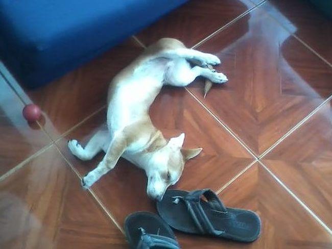 Happy dreams Pet Portraits Relaxing Sleeping Dog Animal Themes Lying Dog Pets Relaxing Day Sleeping Pet EyeEmNewHere