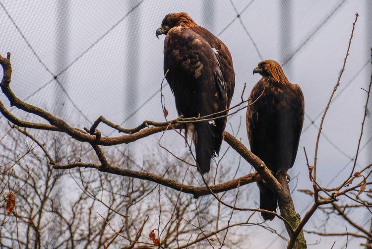 Zoo Zoo Animals  Birds Bird Bird Photography Hawk Hawks EyeEm EyeEm Best Shots Nikon D80
