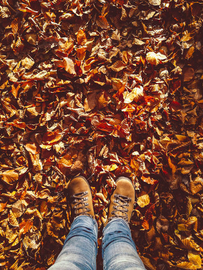 Low section of person standing on maple leaves