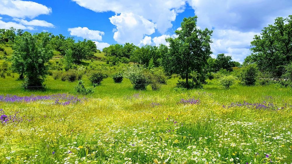 Green Summer Tree Sky Grass Cloud - Sky Green Color Growing