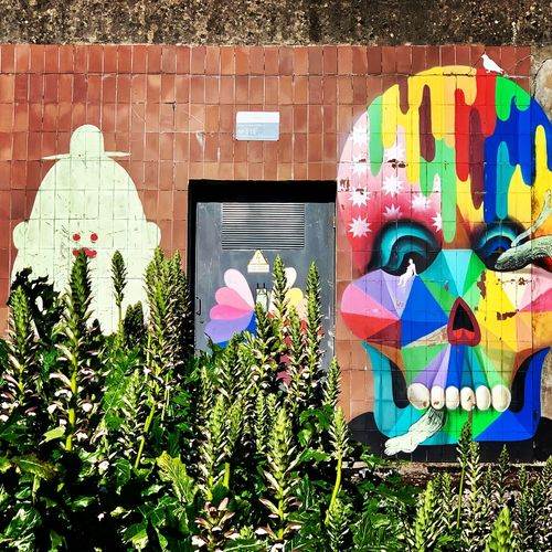 Multi colored flowering plants by graffiti wall