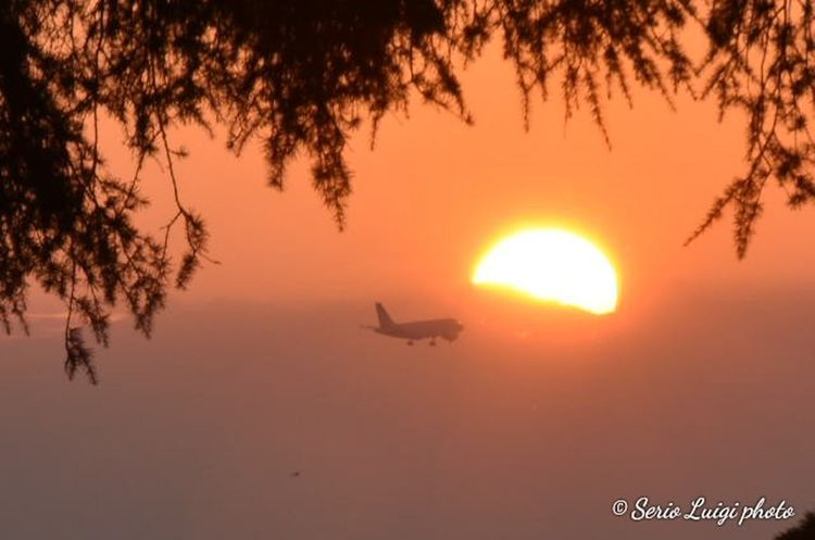 Tree Sunset Flying Sunlight Nautical Vessel Silhouette Sun Beauty Business Finance And Industry Aerospace Industry