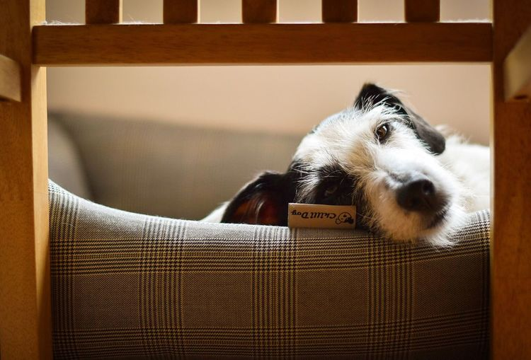 Portrait Of Dog Relaxing On Seat