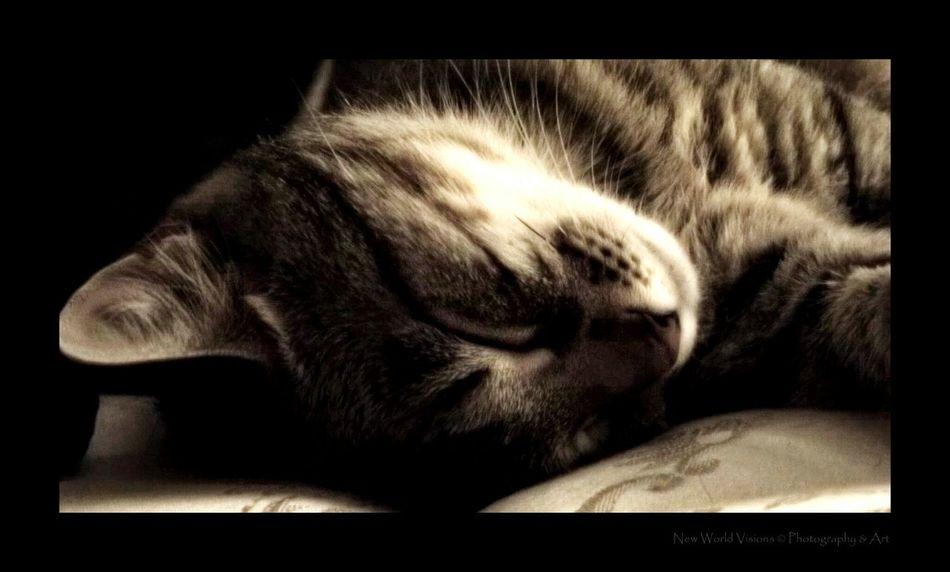 """Kitty baby "" Kitty Love My Kitty Cat Cat Lovers Cats Of EyeEm Sleepy Kitty Sleepyhead Kitty Cuddles Kitty Cats  Pet Photography  Pet Portrait Pet Love I Love My Cat ❤ Caturday Catlovers"