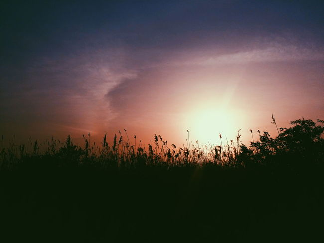 Busan Park Sunset