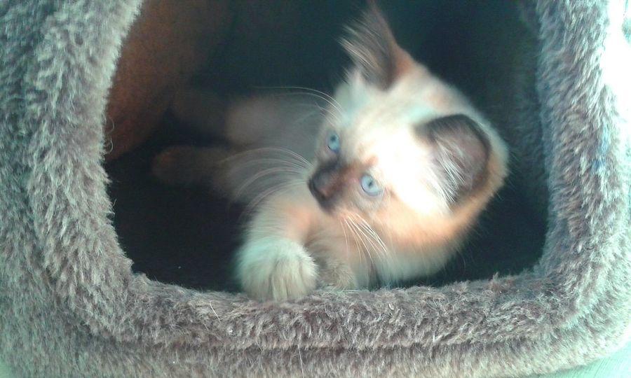 Kitty Kitten 🐱 Katze♥ Babycat Beautyful  Cat Lovers Cat Sweet KITTE Katzenbaby Babykatze Cat Katze Cats 🐱 Babycat ❤ Babycat💕🐾😻 Kitty Cat Katze Cute Cats Beauty Cat♡ Katzenfoto Animal Animals Tier Tiere