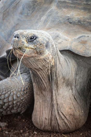 Close-up of tortoise on beach