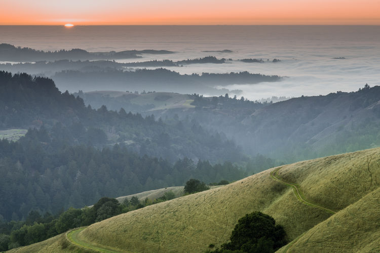 Foggy forest and ocean sunset of santa cruz mountains via russian ridge open space preserve
