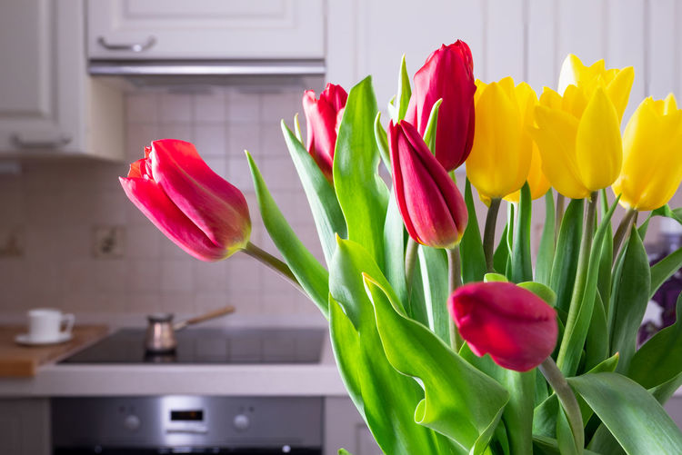Close-up of red tulips in vase at home