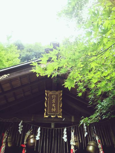 Tree Plant Built Structure Architecture Growth Day Green Color Backyard Shrine 9/17, 2016