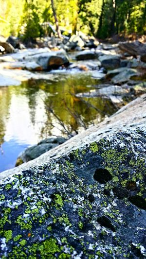 Lichen. Mountain Stream Eyem Nature Lovers  Nature_collection