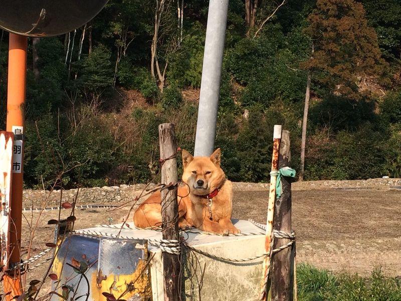 Dog Love 雑種