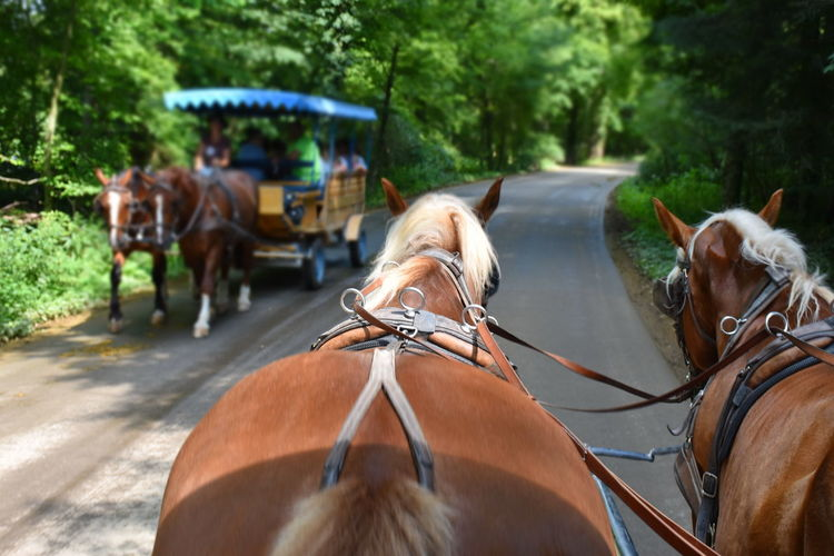 Harnessed horses on the road