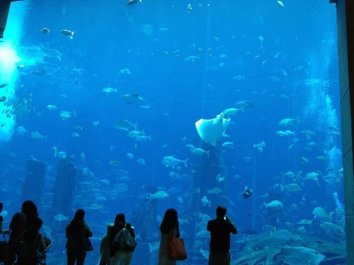 Livings inside big tanks, wondering they also observed us,too Fish Aquarium Scenics Beauty In Nature Travel Destinations Dubai