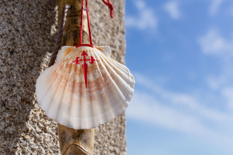 Low angle view of shells on wall against sky