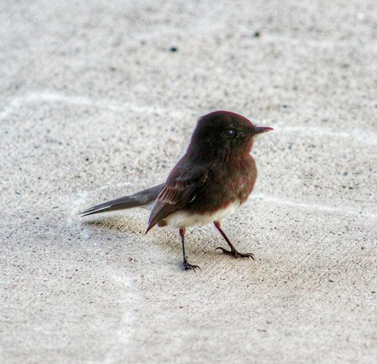 EyeEm Selects Bird One Animal Animals In The Wild Outdoors No People Close-up Junco Chilling On The Patio Animal Themes Nature Beauty In Nature My Back Yard