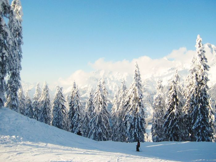 Scenic view of snow covered field and trees against sky