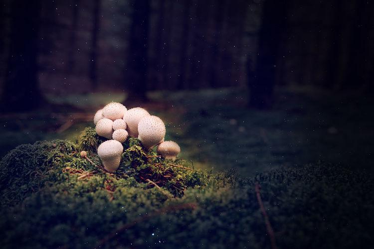 Close-up of mushrooms growing on land