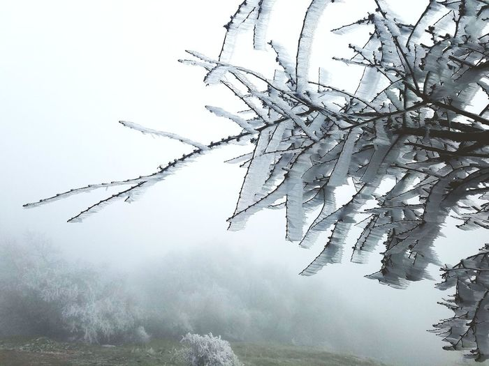 Freezing Ice Branch Branch Tree Branches Winter Cold Temperature Foggy Weather Fog Mountain
