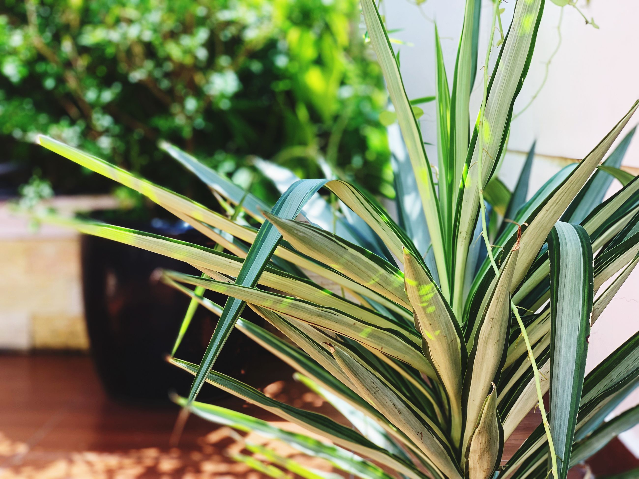 green color, plant, growth, focus on foreground, close-up, leaf, plant part, no people, nature, table, selective focus, day, beauty in nature, freshness, indoors, still life, potted plant, grass, agriculture, blade of grass, leaves
