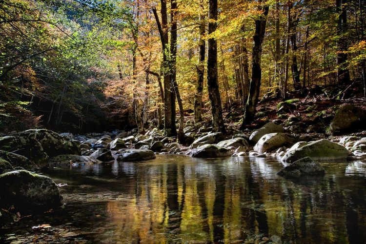 Tree Forest Beauty In Nature Plant Water Land Tranquility Nature No People Scenics - Nature Tranquil Scene Non-urban Scene River Stream - Flowing Water Vizzavona Corsica ❤️ Corse Automne🍁🍂🍃