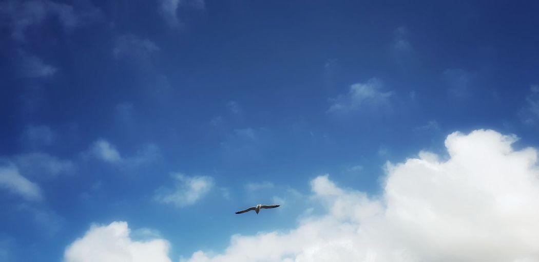 freedom.........