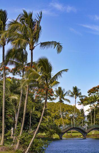 Wailoa Park, Hilo, HI Hawaii Hilo, Hawaii Beauty In Nature Bridge Clear Sky Day Growth Lagoon Nature No People Outdoors Palm Tree Scenics Sky Tranquil Scene Tranquility Tree Water