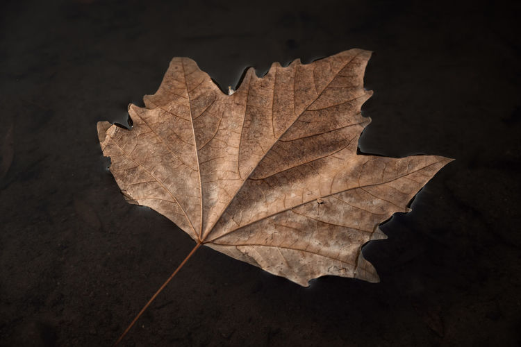 Close-up of dry leaf on plant during autumn