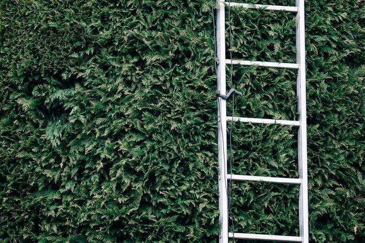 At Work Gardening Ladder Backgrounds Close-up Day Full Frame Gardening Equipment Grass Green Color Growth Ivy Nature No People Outdoors Plant Tree Upwards