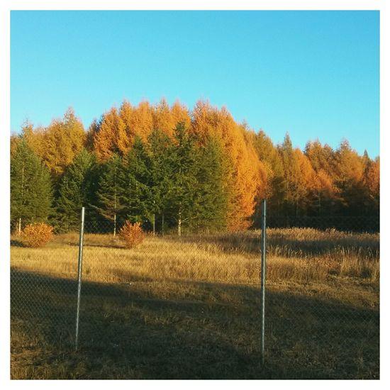 VSCO Autumn Fall осень EyeEm Autumn Colors краски осени