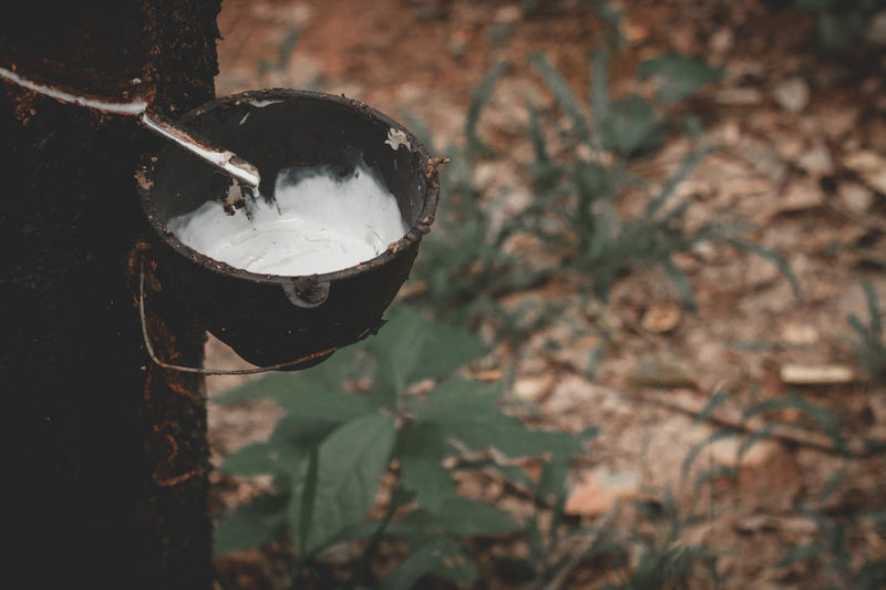 High angle view of rubber collecting in container hanging on tree