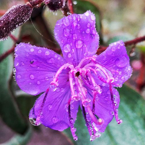 Close-up of wet purple flower
