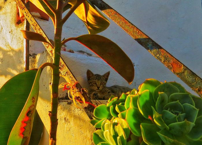 Greece Cat Growth Plant Nature Leaf Day Plant Part No People Sunlight
