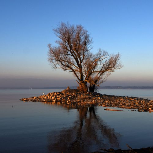 Sky Horizon Over Water Beauty In Nature Clear Sky Landscape Sea Outdoors Nature Bare Tree Blue Scenics Water Tree No People Day Oldtree Oldfriend Lakeconstance Rheinholz Magnificent Evening Sky Best Shots EyeEm Light