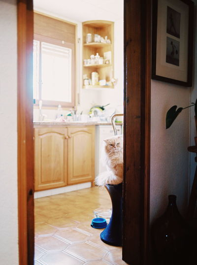 cat Cat Cats Cat♡ Cat Lovers Animal Themes Animal Domestic Animals Domestic Cat No People Mamiya Film Film Photography Filmisnotdead Toilet Bowl Cabinet Doorway Bathroom Sink Entrance Wood - Material