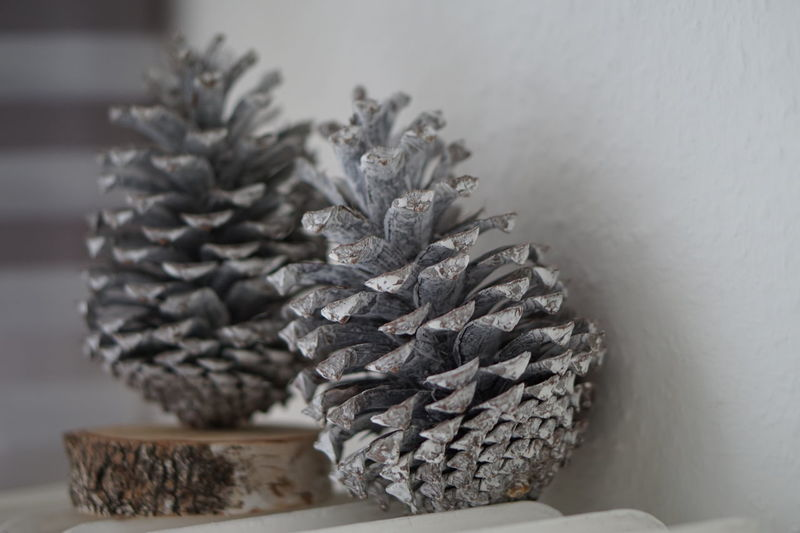 close-up of pine cone on table Still Life Indoors  Close-up No People Pine Cone Selective Focus Plant Table Nature Focus On Foreground Food Flower Food And Drink Growth Pine Tree Freshness Beauty In Nature Flowering Plant Studio Shot Coniferous Tree