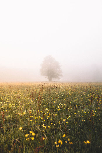 Scenic view of grassy field against sky during foggy weather