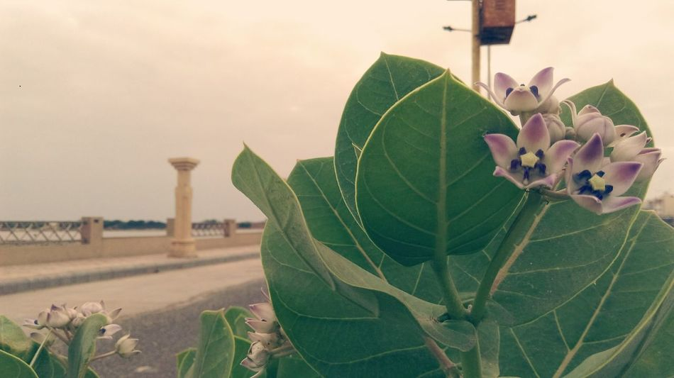 Somewhere In Gujarat,india Leaf Green Color Nature Beauty In Nature Outdoors Flower