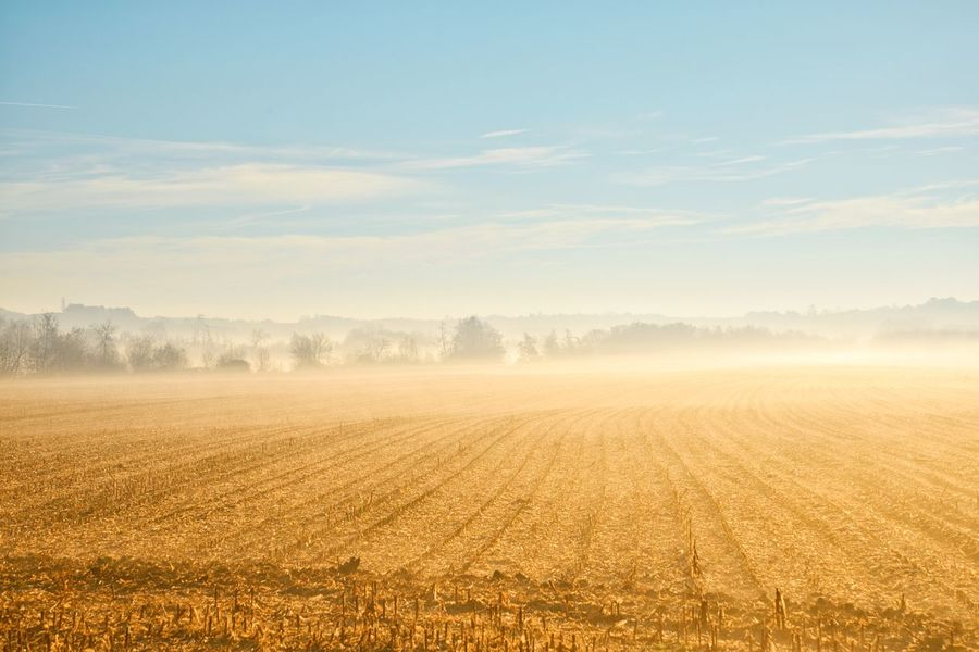 Landscape_Collection Sunrise Field Landscape Agriculture Scenics No People Sky Fog Beauty In Nature Rural Scene Cold Temperature Cereal Plant Cloud - Sky Colour Your Horizn