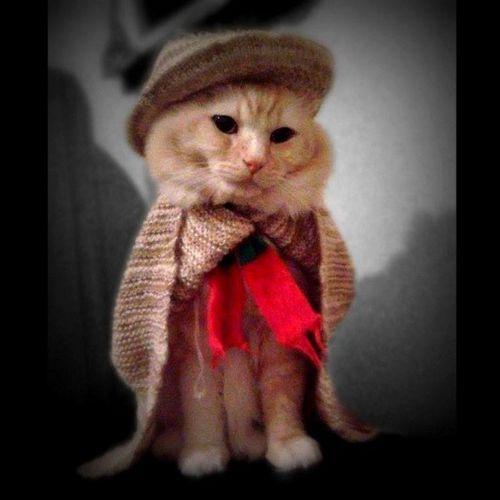 My_cat  Zh2_meni Winter -clothesHandmade