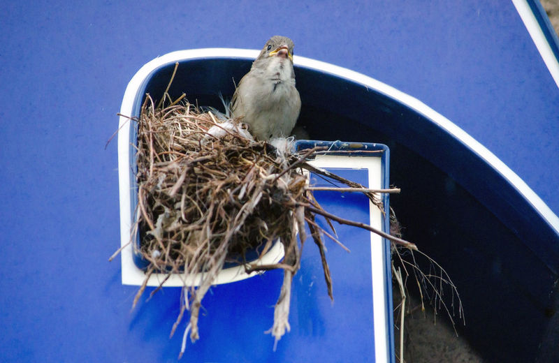 Close-up of bird perching on nest on a store sign