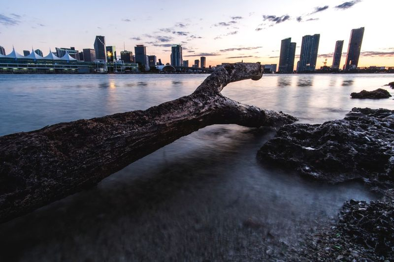 Driftwood at shore of biscayne bay by cityscape during sunset