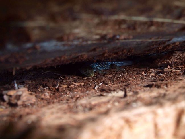 Selective Focus Animal Themes Animals In The Wild One Animal Insect No People Day Close-up Nature Animal Wildlife Outdoors Lizard