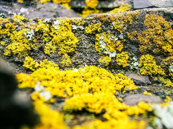 MOSS and Me Moss Moss & Lichen Rock Rock Moss Macro Nature Yellow Green Still Life Rocky Fuzzy Moss In Macro God Bless God's Beauty