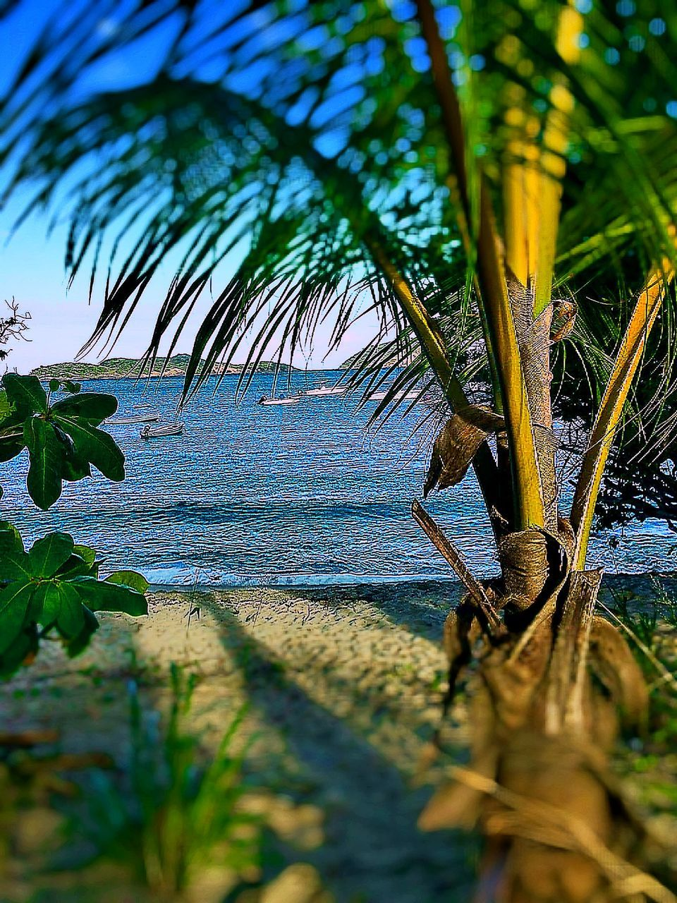 nature, growth, tree, palm tree, beauty in nature, sea, water, tranquility, green color, scenics, outdoors, day, no people, sky