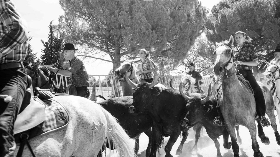 Manade Aubanel arrives at the arene in St. Chaptes. Check This Out SUD_ Enjoying Life Blackandwhite Photography Beautiful Abrivado Camargue Documentary Horse Taureaux