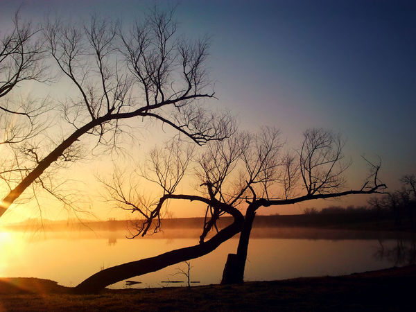 Bare Tree Beauty In Nature Branch Day Dead Tree Lake Nature No People Outdoors Reflection Scenics Silhouette Sky Sunset Tranquil Scene Tranquility Tree Tree Trunk Vapor Trail Water Winter Trees