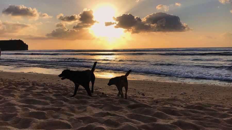 Playing dogs at the beach Dogs Sunset Sea Beach Sand Nature Sky Beauty In Nature