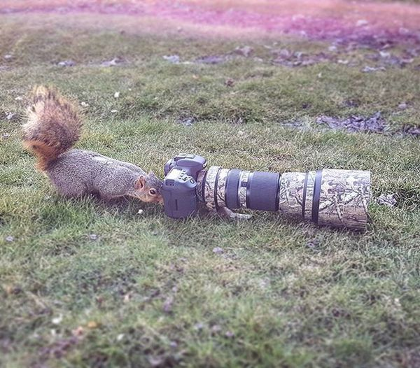 So, I am starting to think my new Photography assistant worked with @photos_by_chills at one time because he's always checking the sharpness in the photos 😄 Squirelphotographer Squirrels Wildlifephotography Igcutest_animals Ig_discover_wildlife Wildlife_seekers Canon_photos Animal_sultans Nature Photographerassistant