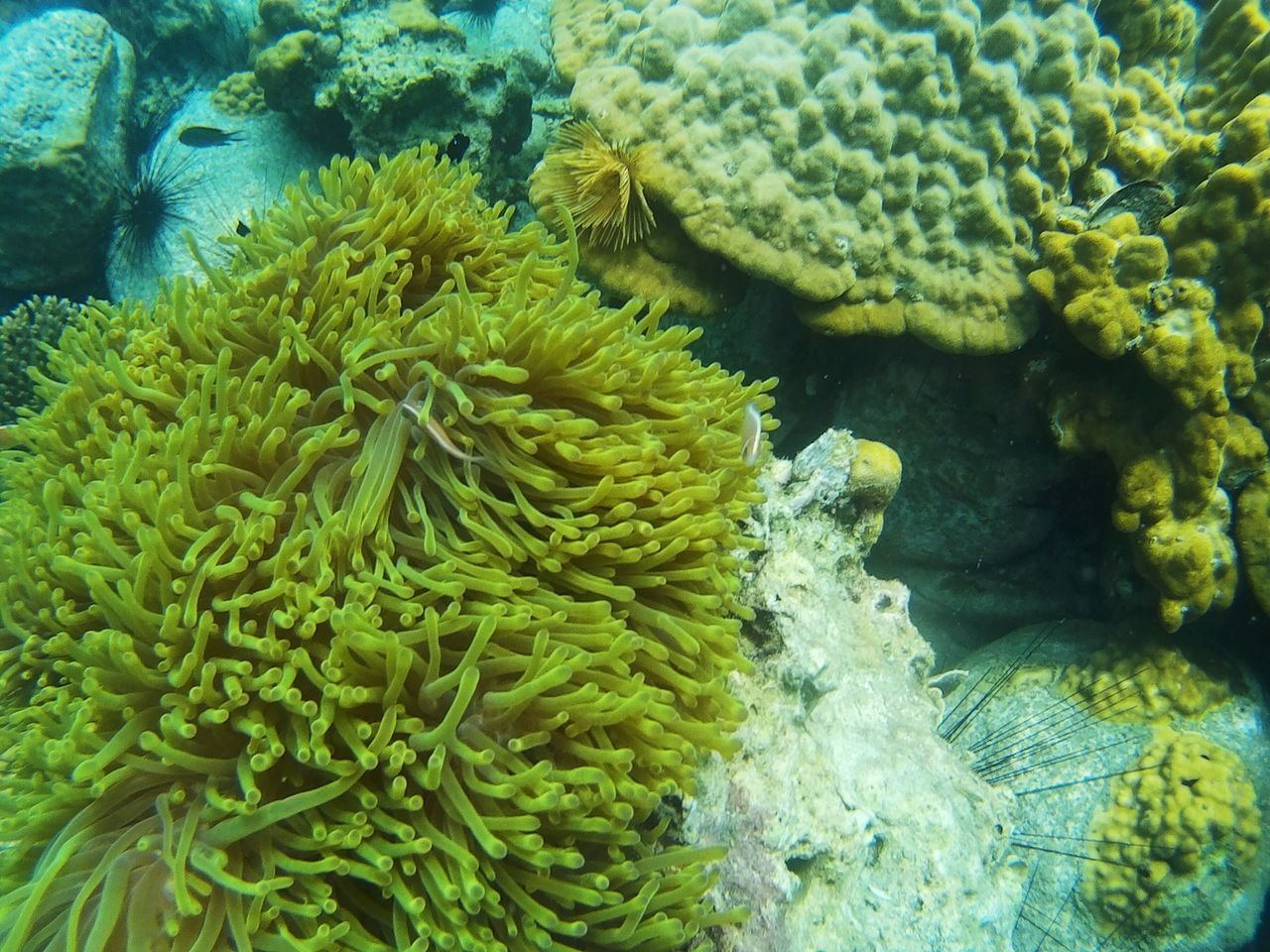 underwater, sea, sea life, animals in the wild, coral, animal wildlife, undersea, invertebrate, water, marine, animal, animal themes, no people, green color, nature, beauty in nature, close-up, vertebrate, fish, outdoors, ecosystem